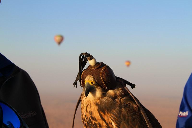 O passeio de balão junto aos seus falcões.
