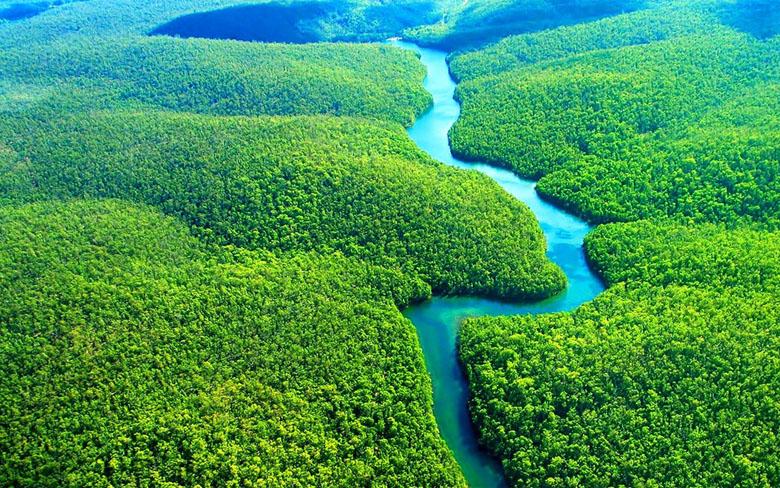 O Rio e floresta amazônicos.