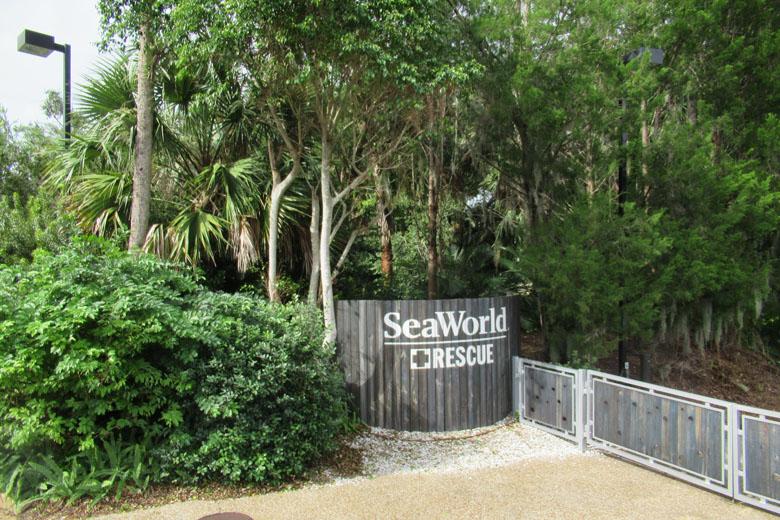 Você conhece os projetos voluntários de resgate e recuperação dos animais do SeaWorld?