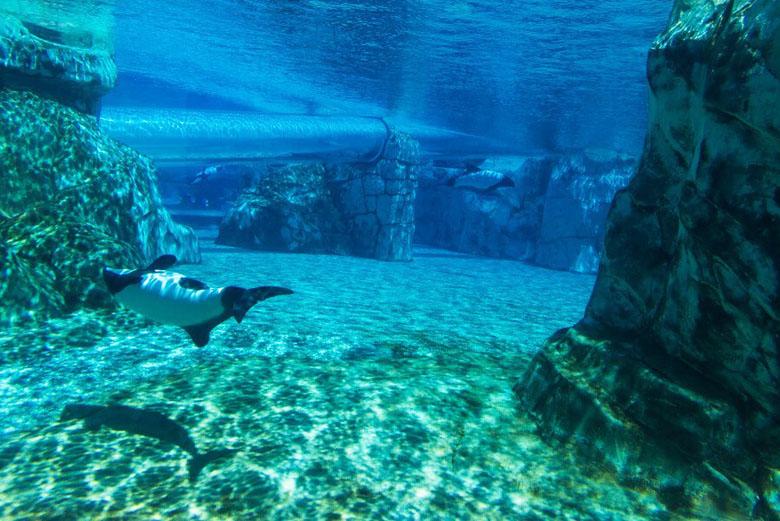 Uma visão geral da atração 'Tubo de Commerson', com o toboágua passando em meio aos golfinhos.