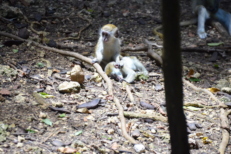 Os macaquinhos filhotes são uma graça.