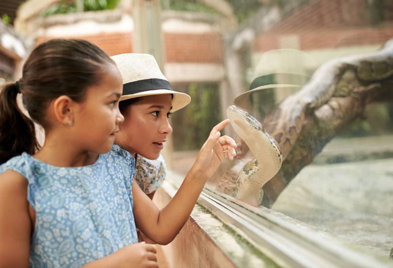 Oportunidade para aproximar as crianças a estes animais perigosos com toda a segurança necessária.