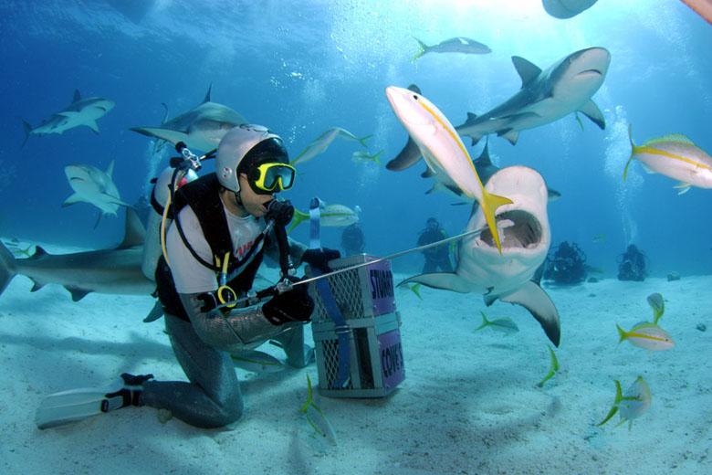 Você teria coragem de encontrar o gigante dos mares?