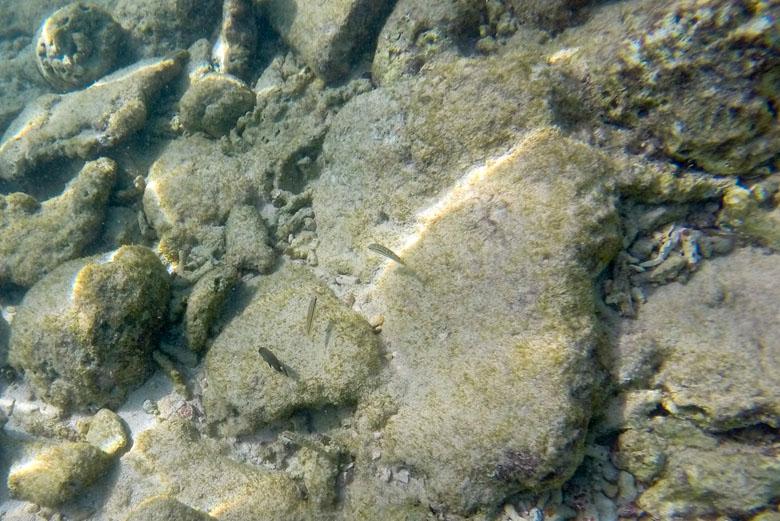 A água é tão clara que até os peixes menores ficam fáceis de serem vistos.