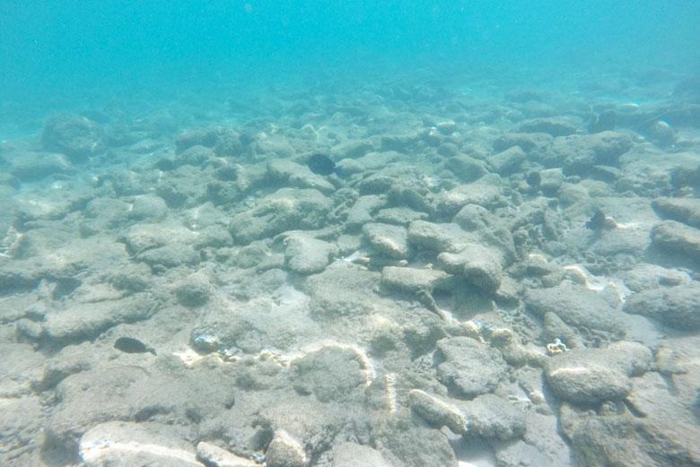 Mesmo em profundidade rasa já dá para avistar alguns peixes.