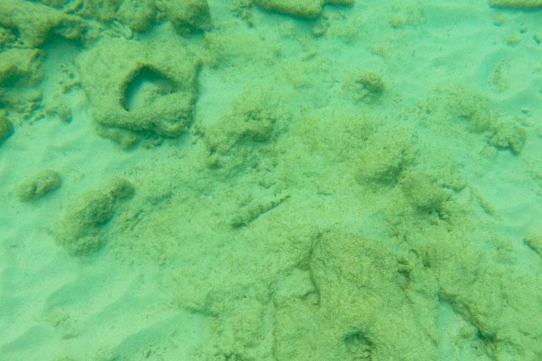 Conseguiu ver o peixe camuflado no centro da foto?