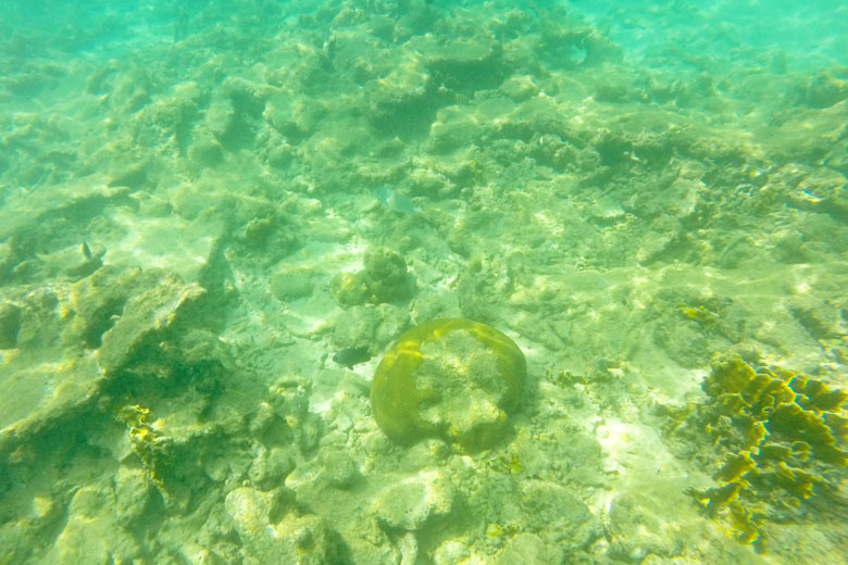 As pequenas grutas embaixo das pedras são excelentes para encontrar os peixinhos.