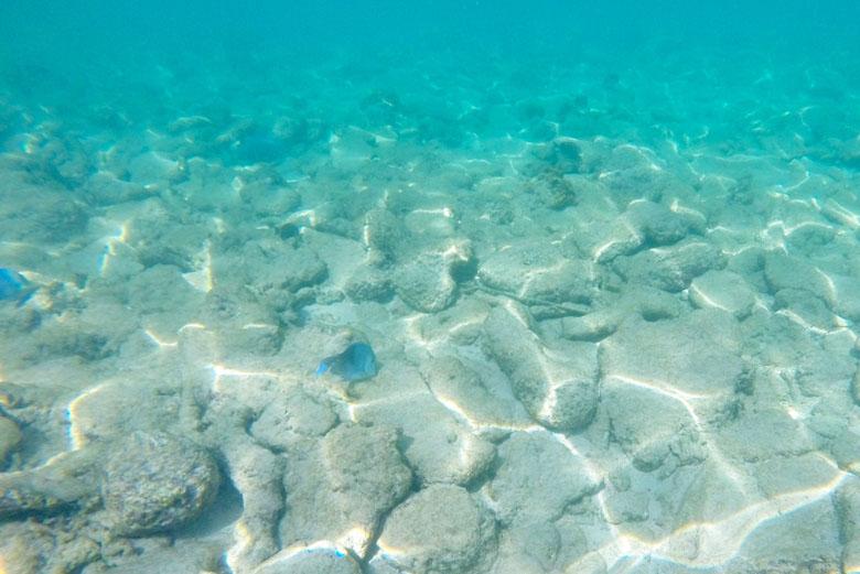 Os peixinhos azuis são bem característicos e é possível ver muitos deles.