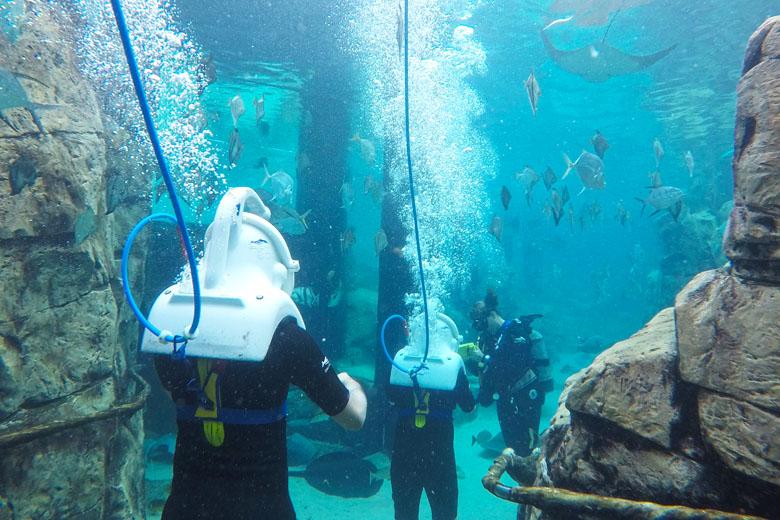 SeaVenture é a melhor forma de entrar em contato com os animais no Discovery Cove.