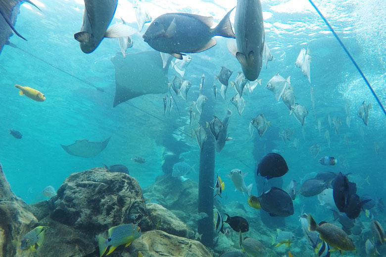 A incrível vida marinha.