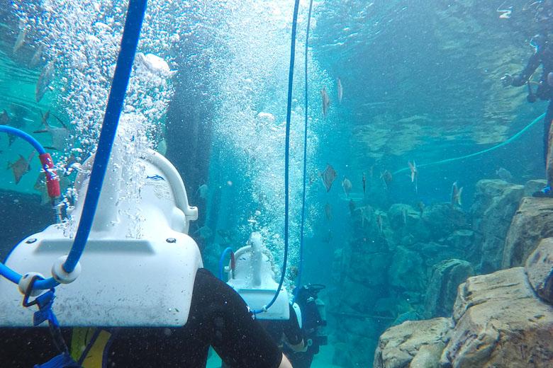 Entre as paradas, os visitantes caminham pelo aquário enfileirados, sendo guiados pelos funcionários especialistas.