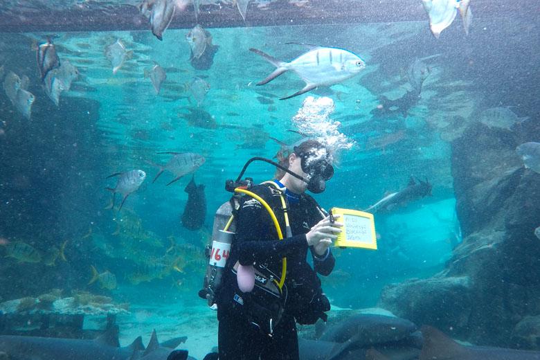 É uma forma bastante eficiente de se comunicar com os visitantes e explicar mais sobre as espécies.