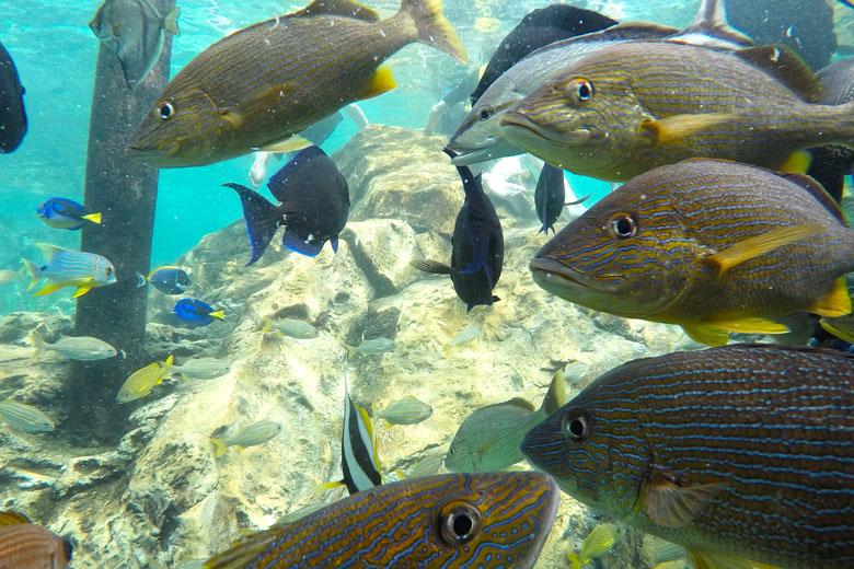 Terceira parada: na hora da alimentação, espere muitos peixes passando perto de você!