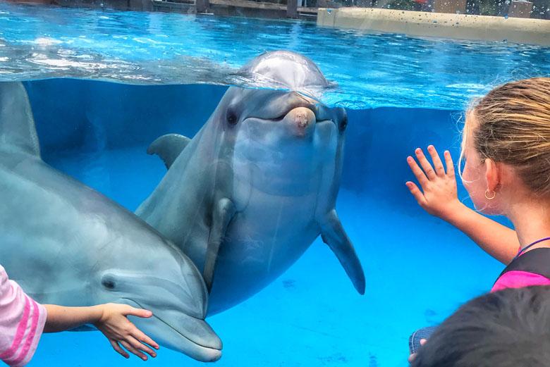 As crianças ficam, literalmente, maravilhadas com o mundo dos animais marinhos.