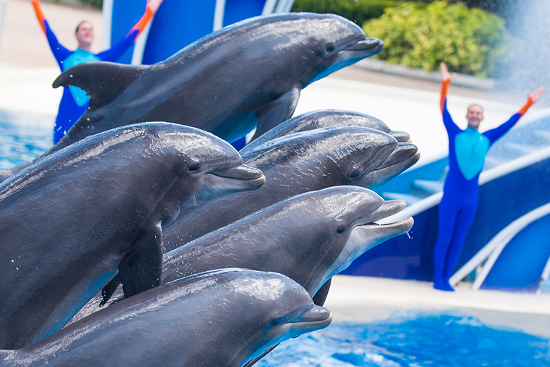 Dolphin Days.