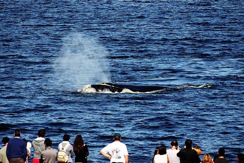 Nosso vizinho fica ainda mais interessante durante a temporada de baleias.