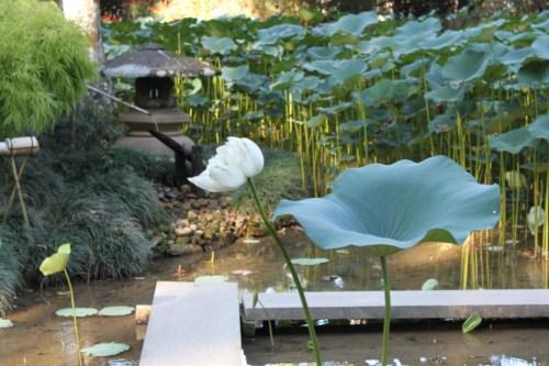 pedras jardim botanico:Falando de Viagem Jardim Botânico do Rio de Janeiro